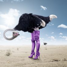 Приколы со страусами (11 фото)