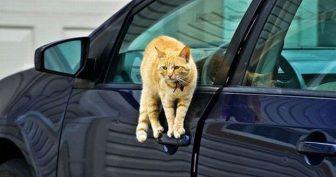 Животные в машинах (12 фото)
