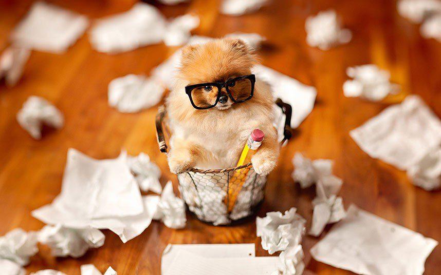 Померанский шпиц в корзине с бумагами.