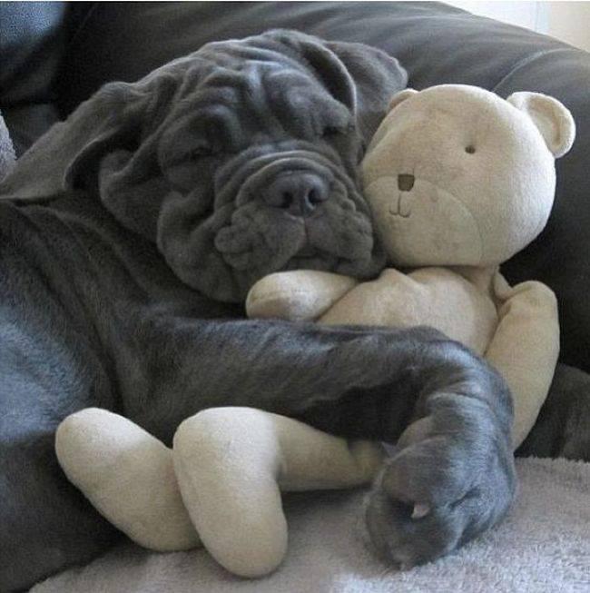 Спят усталые игрушки и мастиф.