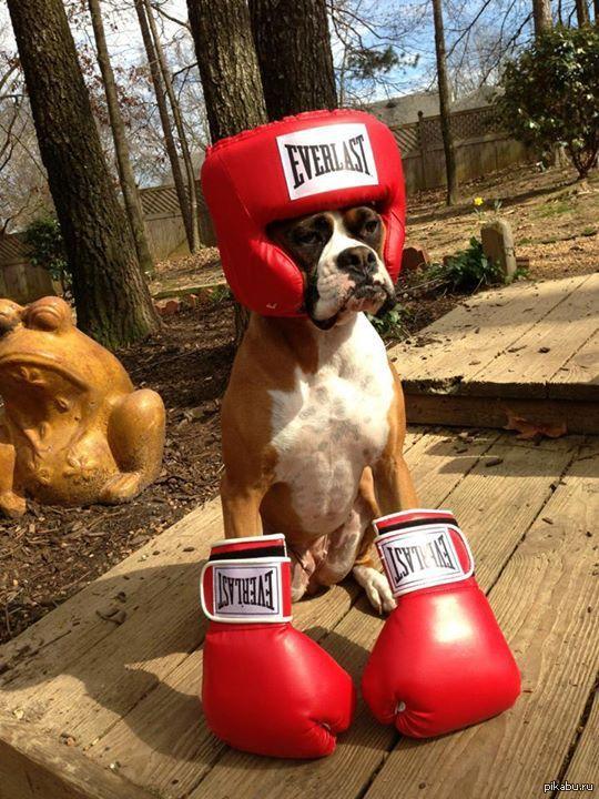 Боксер в боксерских перчатках.