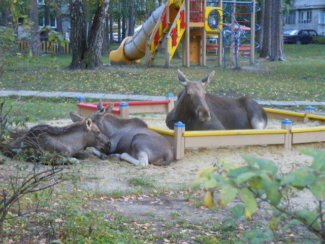 1379999613_1379958970_moose_playground_02