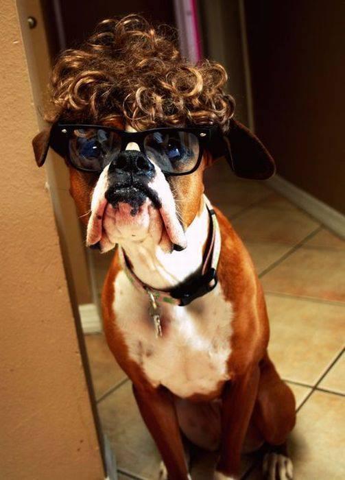 Боксер в парике и очках.