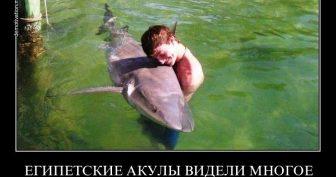 Приколы про русских туристов (16 фото)