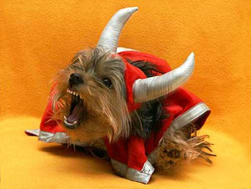 Йоркширский терьер в костюме викинга.