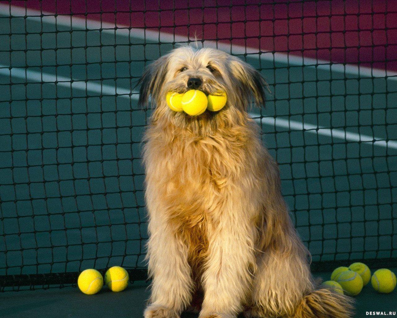 Бриар играет в большой теннис.