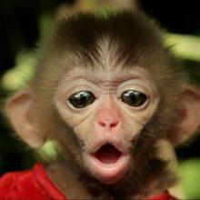 Прикольные маленькие обезьянки (41 фото)