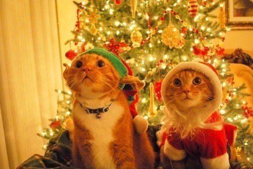 Коты оделись к новому году