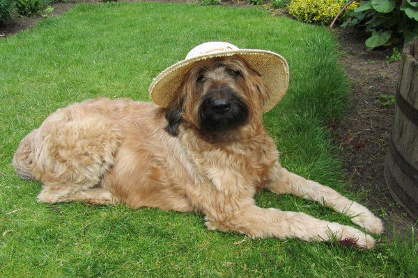 Бриар в шляпе.