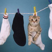 Приколы про вислоухих котов (21 фото)