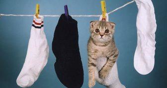 Приколы про вислоухих котов. (11 фото)