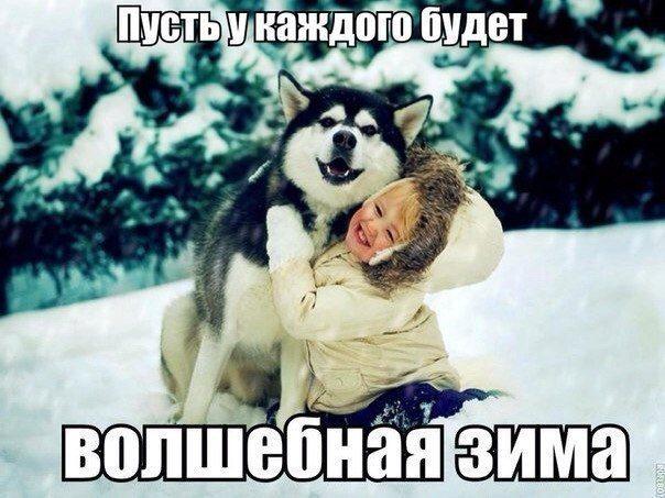 Новогодний пес, куда же без него?