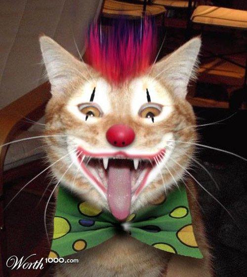 animals-clown-34