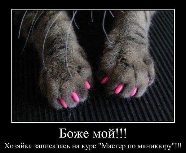 Коту сделали розовый маникюр