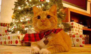 Кот готов встречать новый год