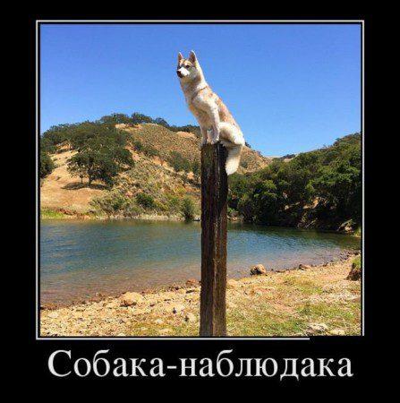 1448797816_demotivatory-svezhie-11_podstolom-su