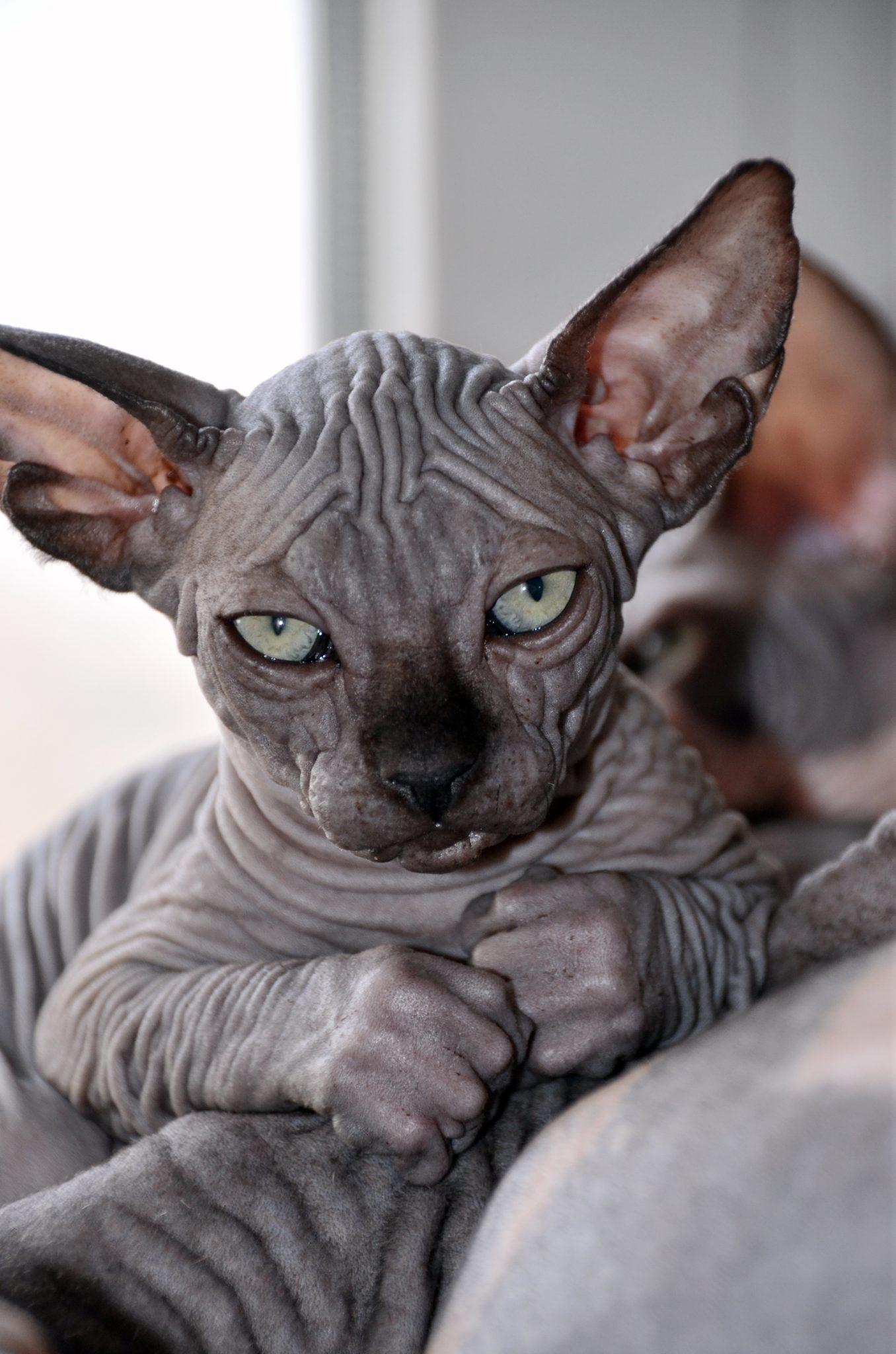 Толстый кот картинки