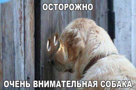 ko_22082015_humour