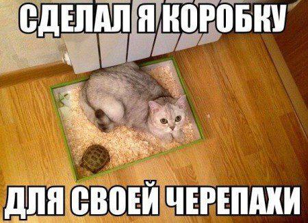 smeshnie_kartinki_145969217959