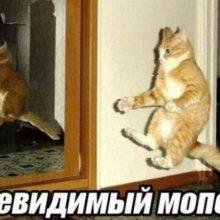 Прикольные картинки про котов (83 фото)