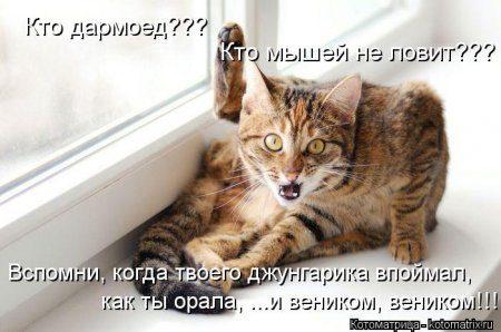 1350912222_kotomatritsa_2w