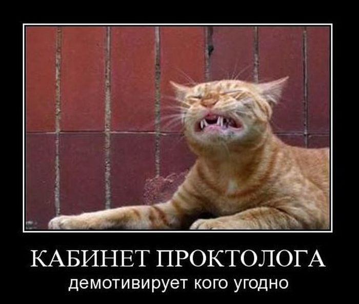 1354864731_1354717434_demotivatory-pro-kote-12