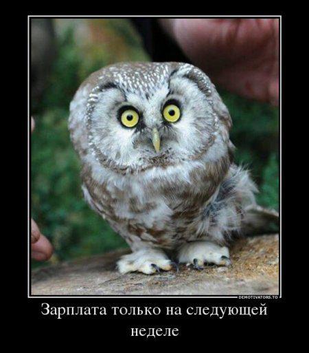 1384752842_78613482_zarplata-tolko-na-sleduyuschej-nedele