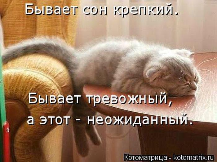 1391883815_cotomatricy-photos-3