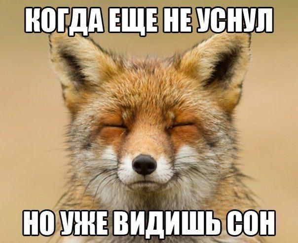 1422605300_0qwlfevlohw