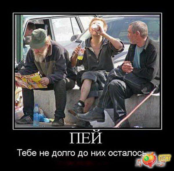 1437488506_smeshnye-foto-alkashey-losya-net-96311