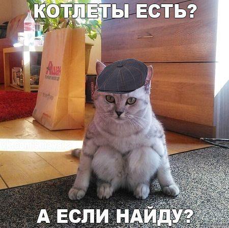 1462677893_kotoprikoly-svezhie-18_xaxa-net-ru