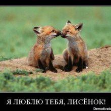 Прикольные картинки с надписями «Я тебя люблю» (36 фото)