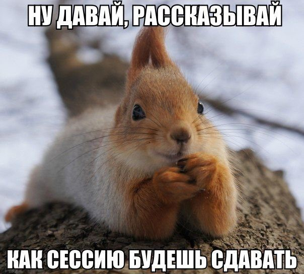 201412230024-nu-davay-rasskazyvay-kak-sessiyu-budesh-sdavat-kashamalasha-com
