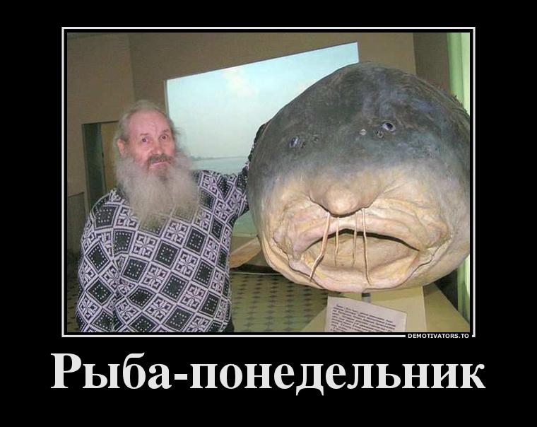 54943103_ryiba-ponedelnik
