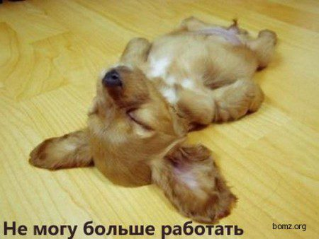 596391-2010-11-16-05-49-30-bomz-org-lol__prikol_ne_mogu_bolshe_rabotat