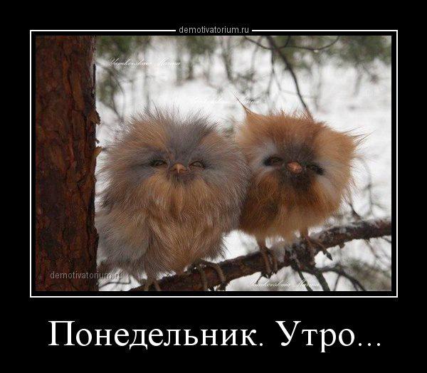 demotivatorium_ru_ponedelnik_utro_67515