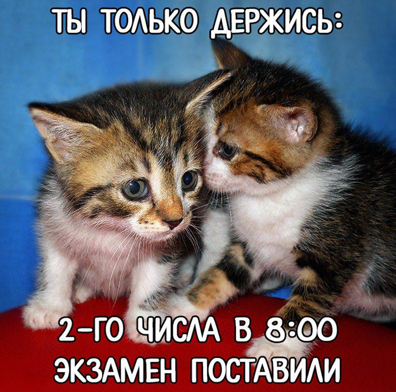 ekzamen_noviy_god