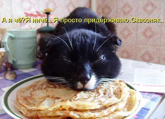 foto_kotov_01