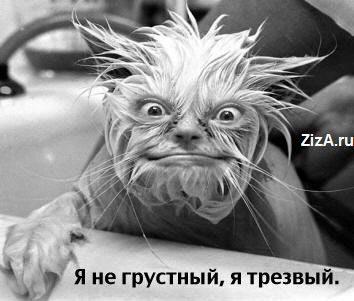 hohmodrom_15140473889186
