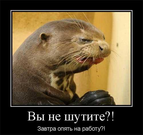 kartinki_pro_rabotu_06