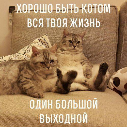 khorosho-byt-kotom-vsya-tvoya-zhizn-odin-bolshoj-vykhodnoj-list