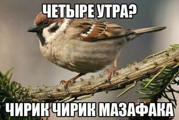 podborka_dnevnaya_30