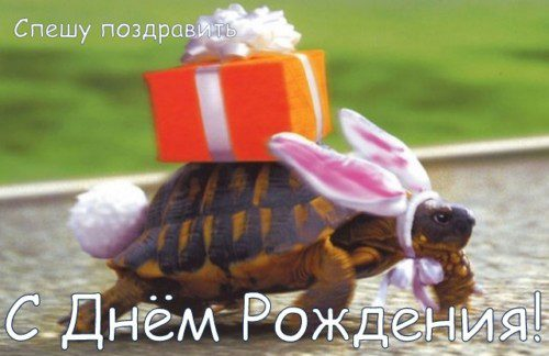 pozdravleniya-s-dnem-rozhdeniya-prikolnye