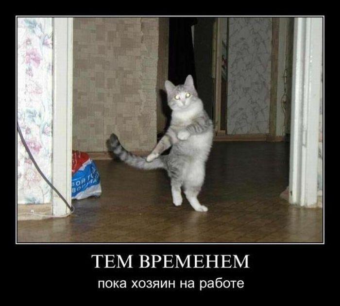 prikolnye_demotivatory_obo_vsem_na_svete_foto_09