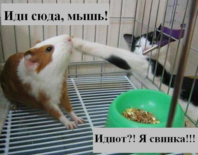 prikolnye_koty_foto_s_nadpisyami_01