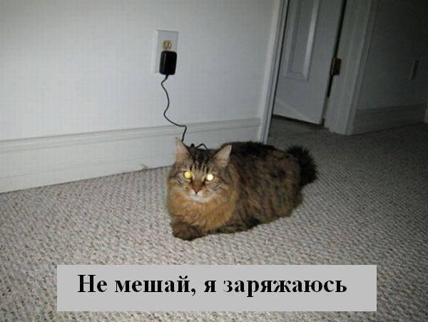 prikolnye_koty_foto_s_nadpisyami_02