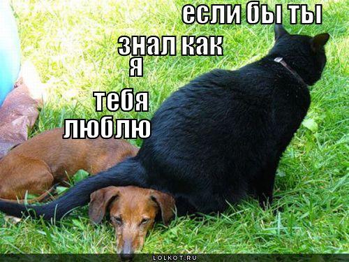 ya-tebya-lyublyu_1296137593