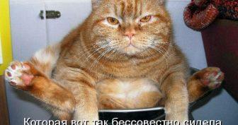 Прикольные картинки про кошек (45 фото)