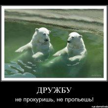 Прикольные картинки про дружбу с надписями (54 фото)