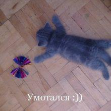 Прикольные картинки про котят (37 фото)